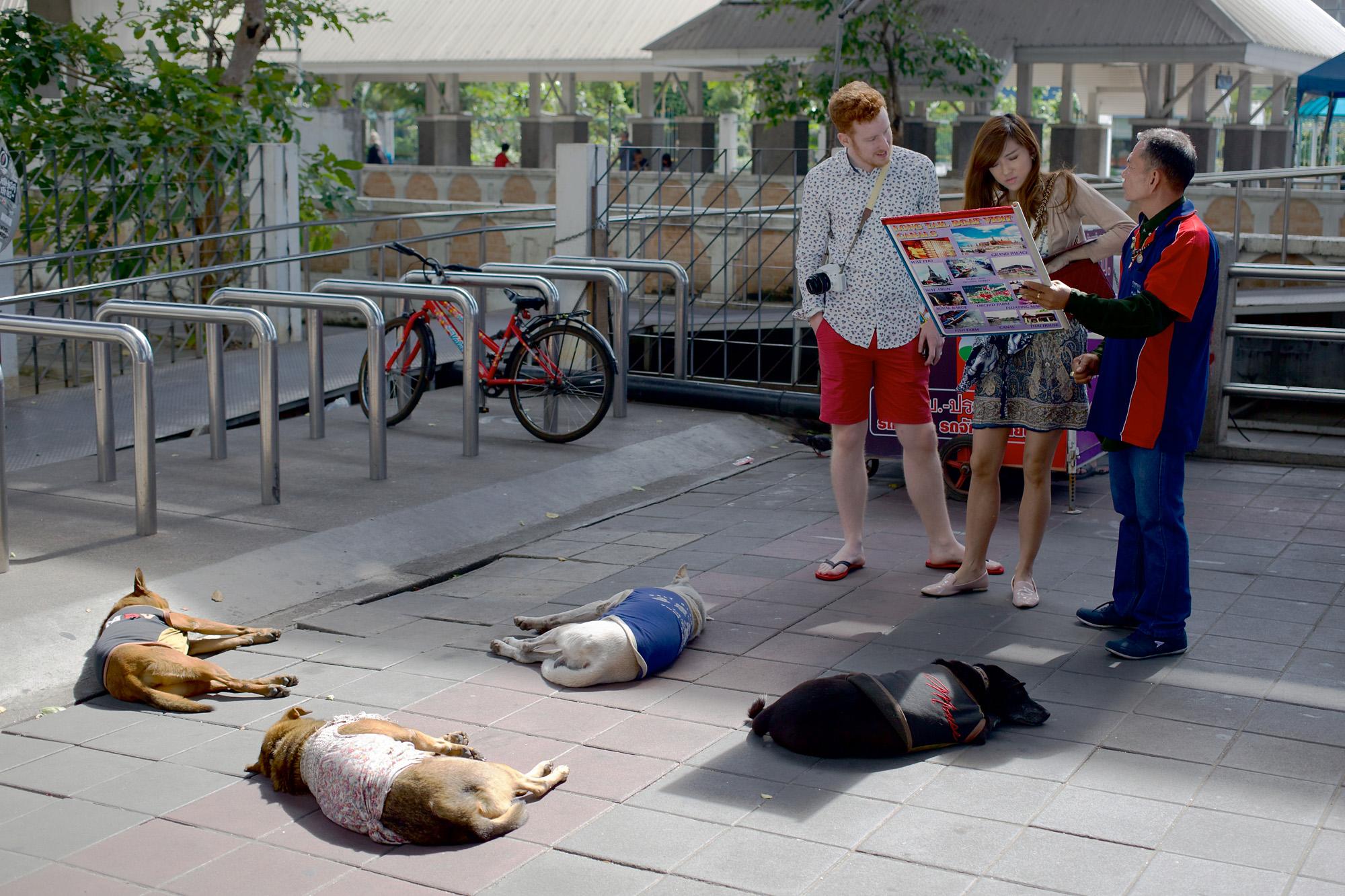 Four dogs, asleep